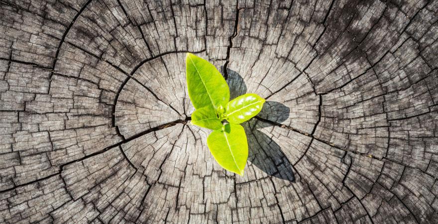 cómo gestionar la resiliencia | toma nota marzo 2015 | 880
